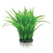 biOrb Pflanzen für biOrb Aquarien