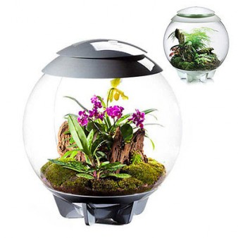biOrb Air Aquarien Terrarium