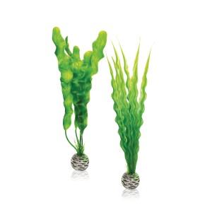 Pflanzen Set mittelgroß grün