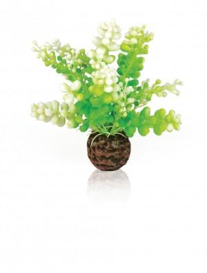 biOrb Caulerpa grün