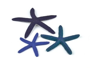 biOrb Seestern Set blau