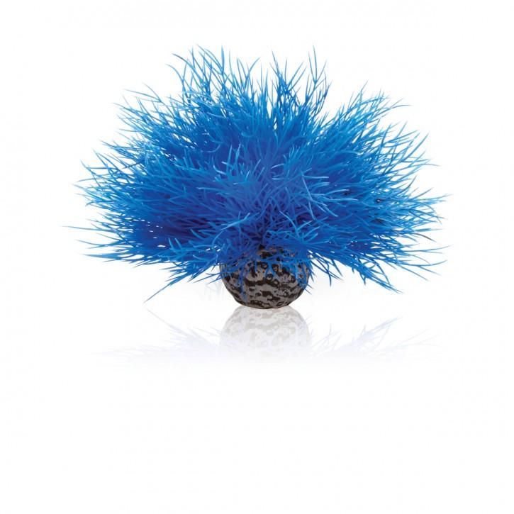 biOrb Seelilie blau
