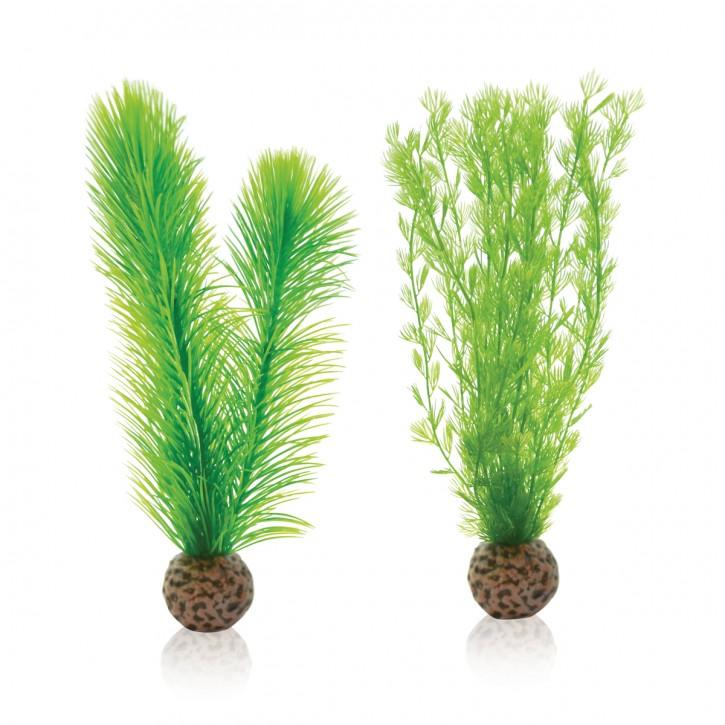 biOrb Federfarn Set grün klein