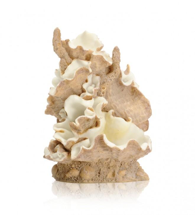 biOrb Muschel Ornament mittel