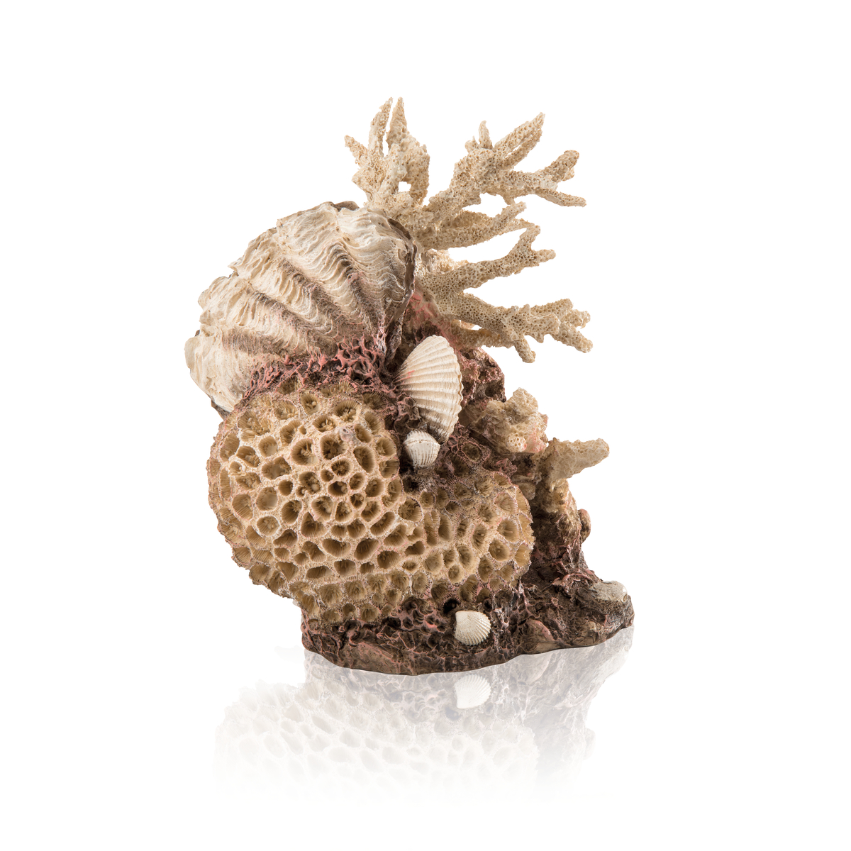 biOrb Korallen Muschel Ornament natural